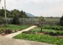 南京市溧水区农村自建房便宜出售